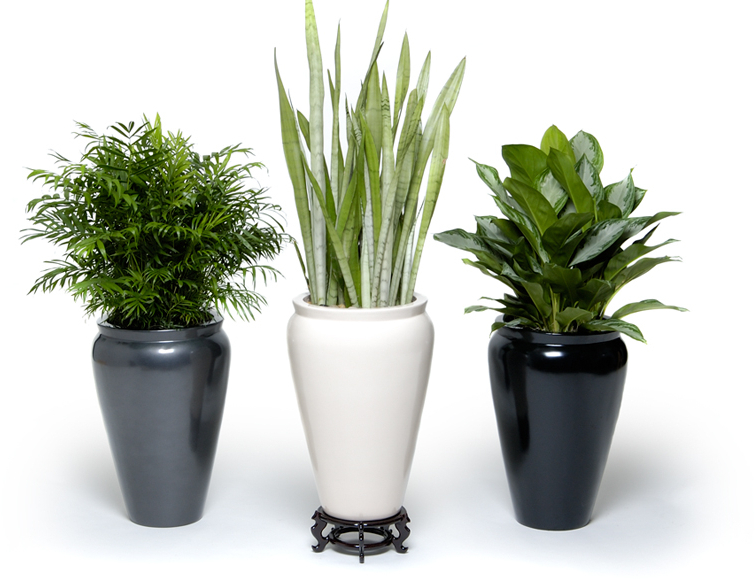 Image Gallery Indoor Plants And Pots